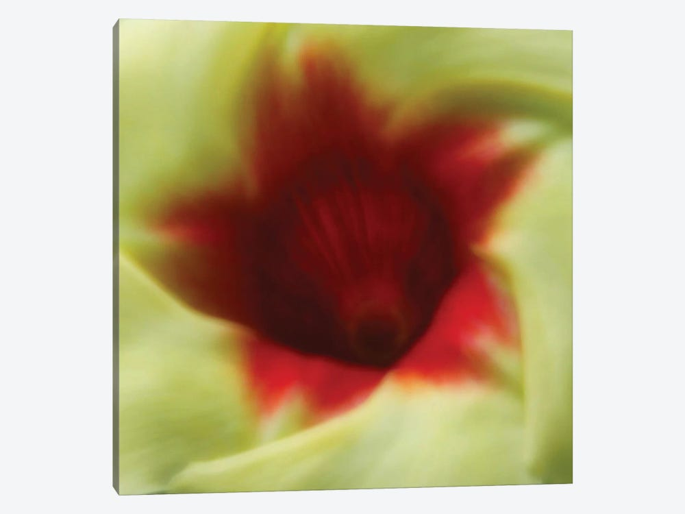 Flower Edible by Dana Brett Munach 1-piece Canvas Print