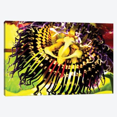 Orchid 3-Piece Canvas #DBM62} by Dana Brett Munach Canvas Print
