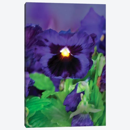 Pan Orchid Canvas Print #DBM63} by Dana Brett Munach Canvas Print