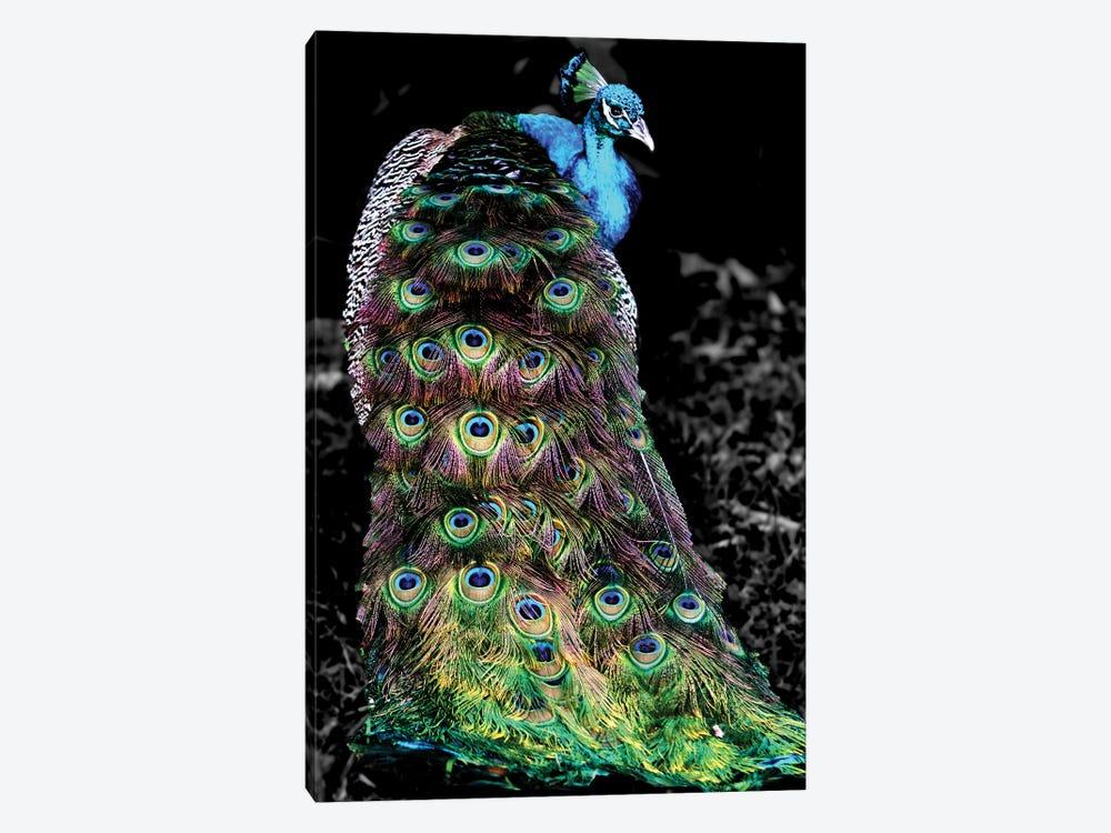 Peacock At Night by Dana Brett Munach 1-piece Canvas Artwork