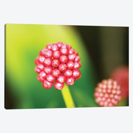Pod Canvas Print #DBM66} by Dana Brett Munach Canvas Wall Art