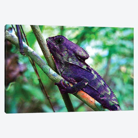 Purple Iguana Canvas Print #DBM69} by Dana Brett Munach Canvas Art Print