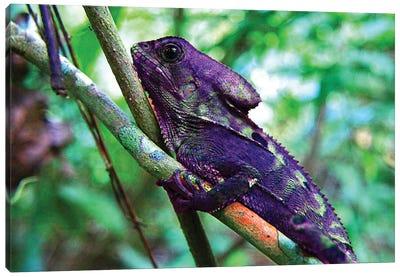 Purple Iguana Canvas Art Print