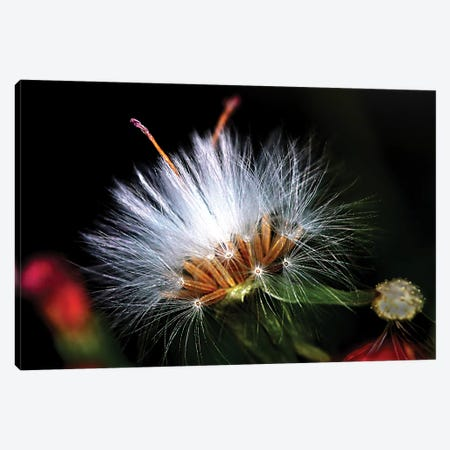 Snow Flower Canvas Print #DBM79} by Dana Brett Munach Canvas Artwork