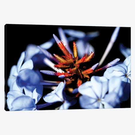 Blue And Orange Flower Canvas Print #DBM7} by Dana Brett Munach Canvas Artwork