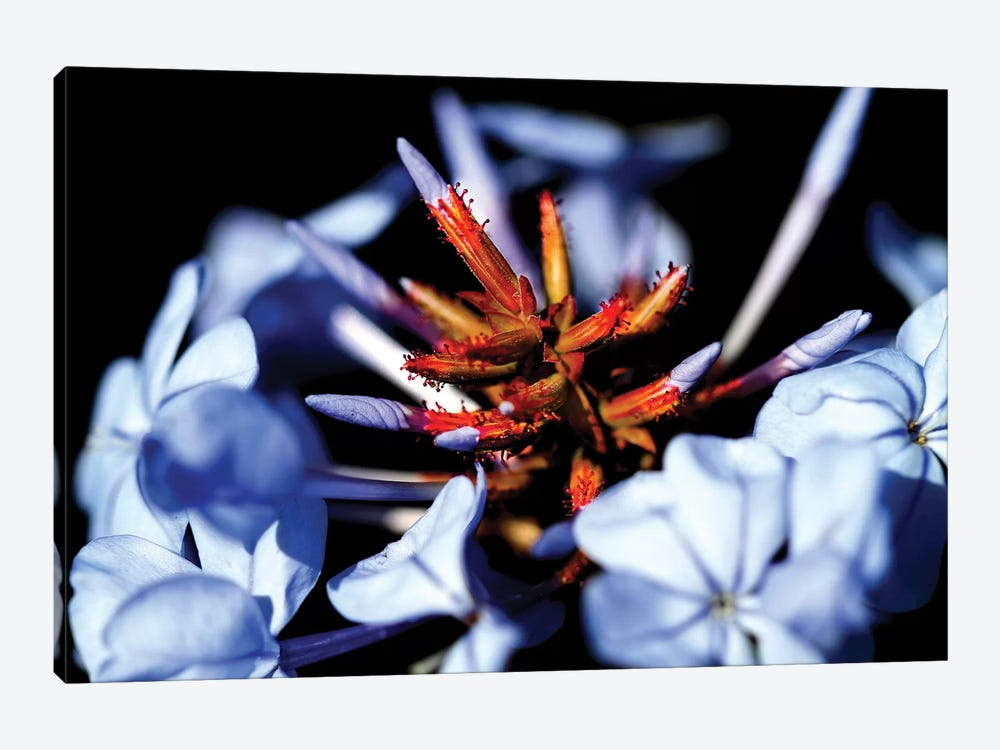 Blue And Orange Flower 1-piece Canvas Wall Art