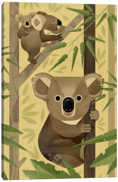 Koala Canvas Print #DBR12