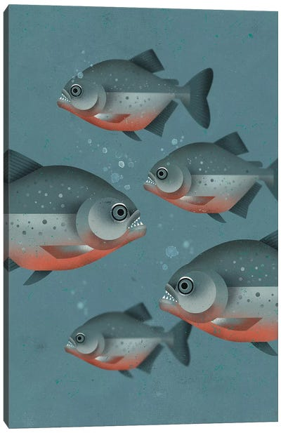 Piranhas Canvas Art Print