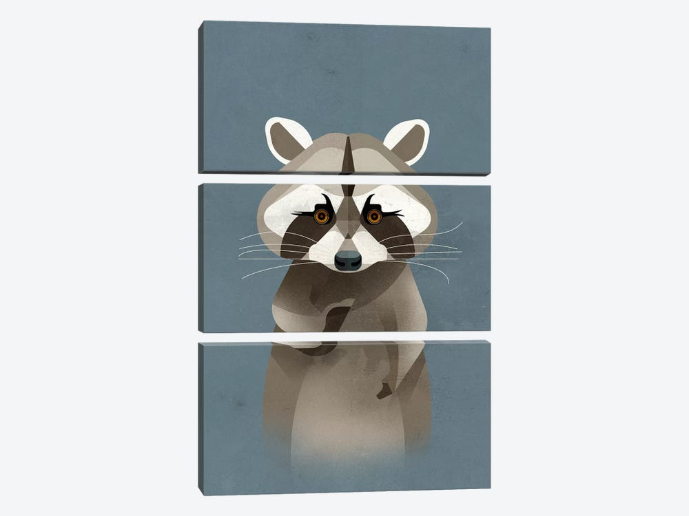 Racoon by Dieter Braun 3-piece Art Print