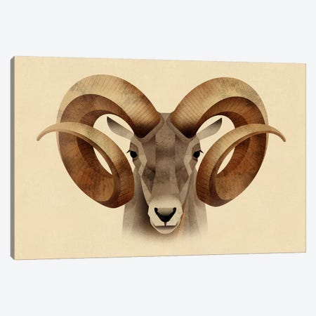 Urial Canvas Print #DBR22} by Dieter Braun Canvas Wall Art