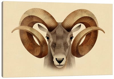 Urial Canvas Art Print