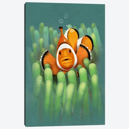 Clown Fish Canvas Print #DBR2} by Dieter Braun Canvas Art Print