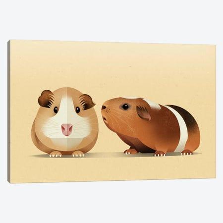Guinea Pig Canvas Print #DBR31} by Dieter Braun Art Print
