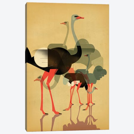 Ostriches Canvas Print #DBR35} by Dieter Braun Canvas Wall Art