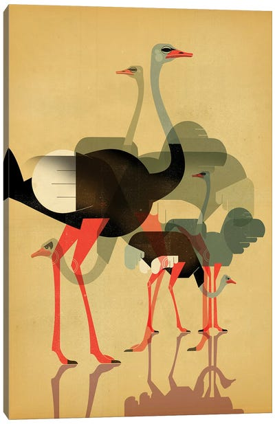 Ostriches Canvas Art Print