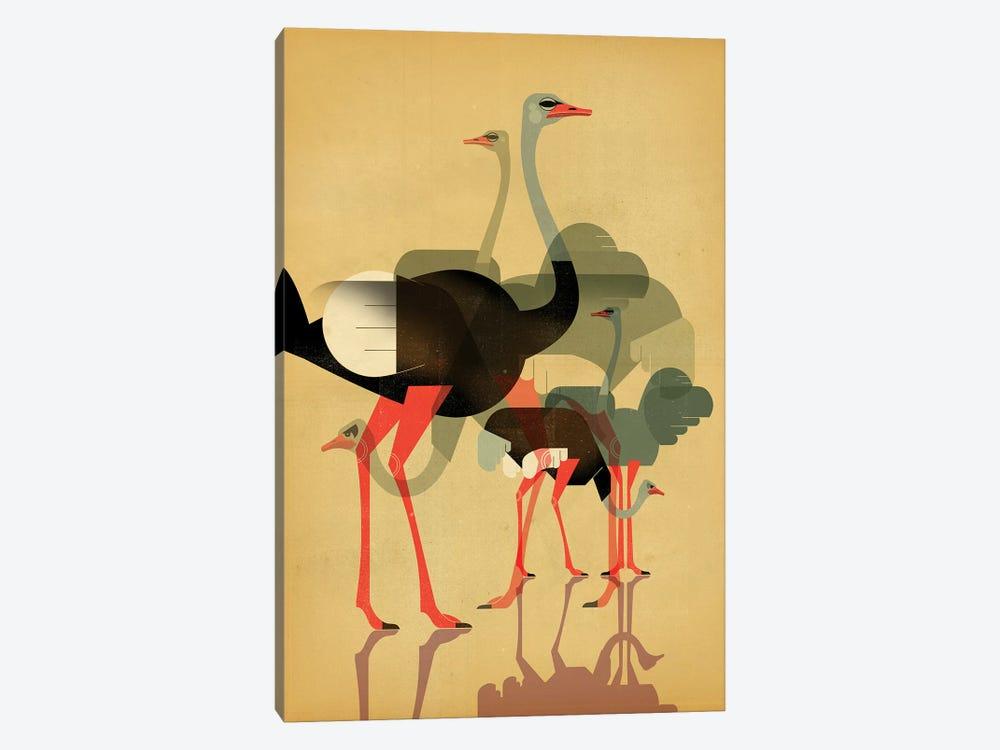 Ostriches by Dieter Braun 1-piece Canvas Print