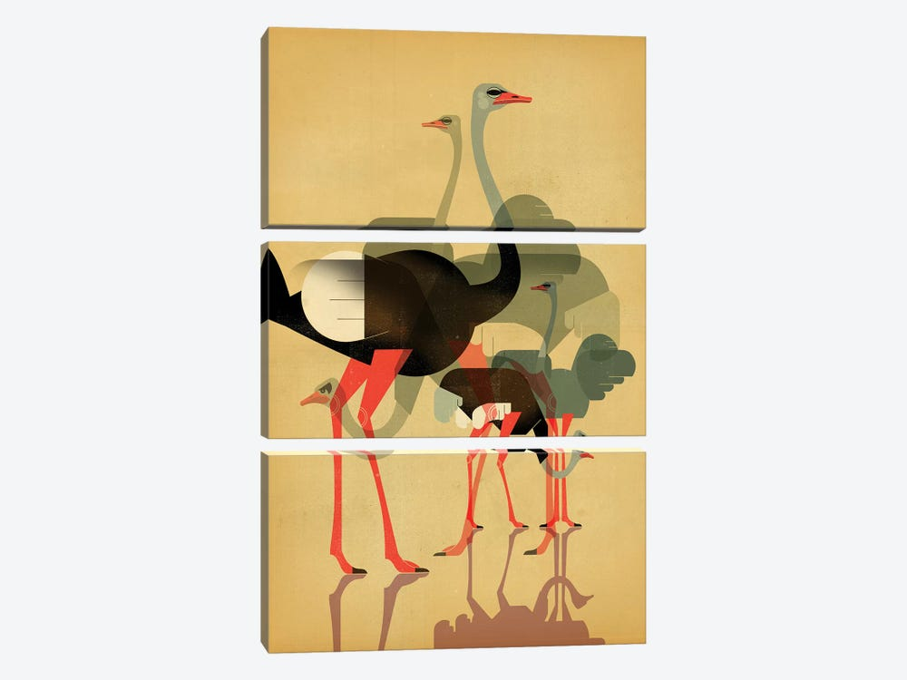 Ostriches by Dieter Braun 3-piece Art Print