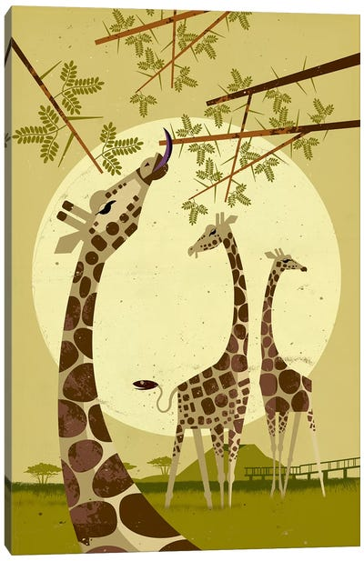 Giraffes Canvas Art Print