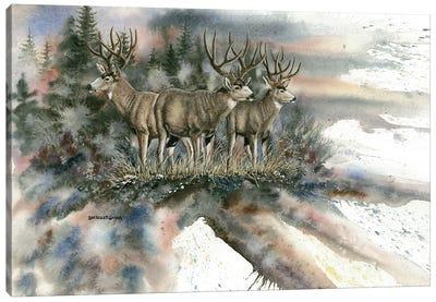 Battle Mountain Bucks Canvas Art Print