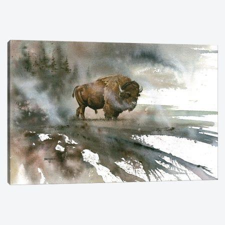 Bison Canvas Print #DBT34} by Dave Bartholet Canvas Art