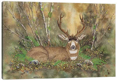 Blacktail Buck Canvas Art Print