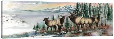 Clear Cut Bull Canvas Art Print