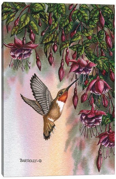 Fuchsias Canvas Art Print