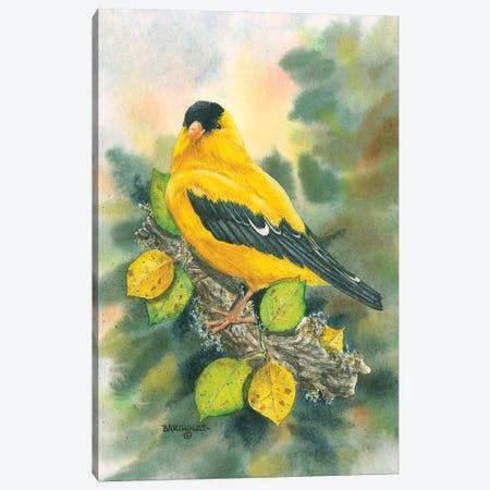 Goldfinch Canvas Print #DBT47} by Dave Bartholet Art Print