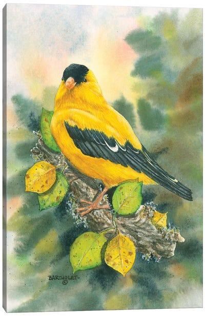 Goldfinch Canvas Art Print