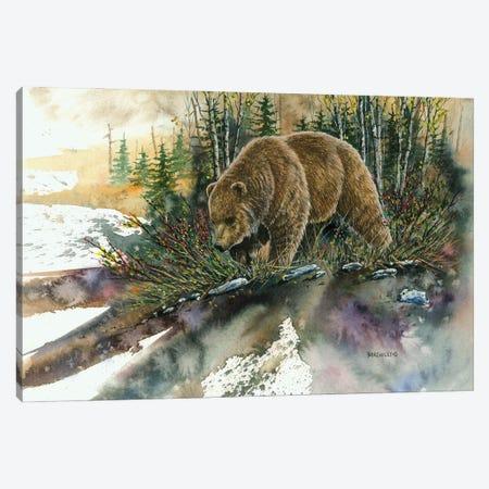 Huckleberry Grizz Canvas Print #DBT49} by Dave Bartholet Canvas Art