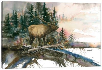 Mike's Bull Canvas Art Print