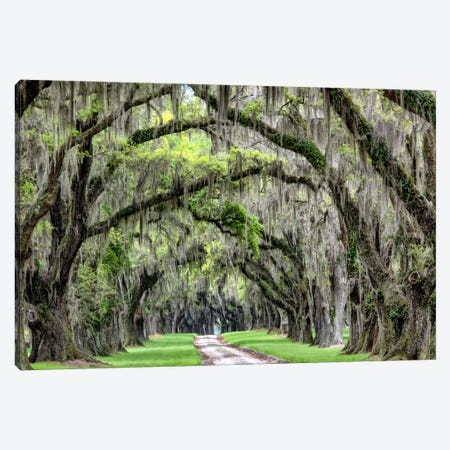 The Old South Canvas Print #DBU10} by Daniel Burt Canvas Artwork