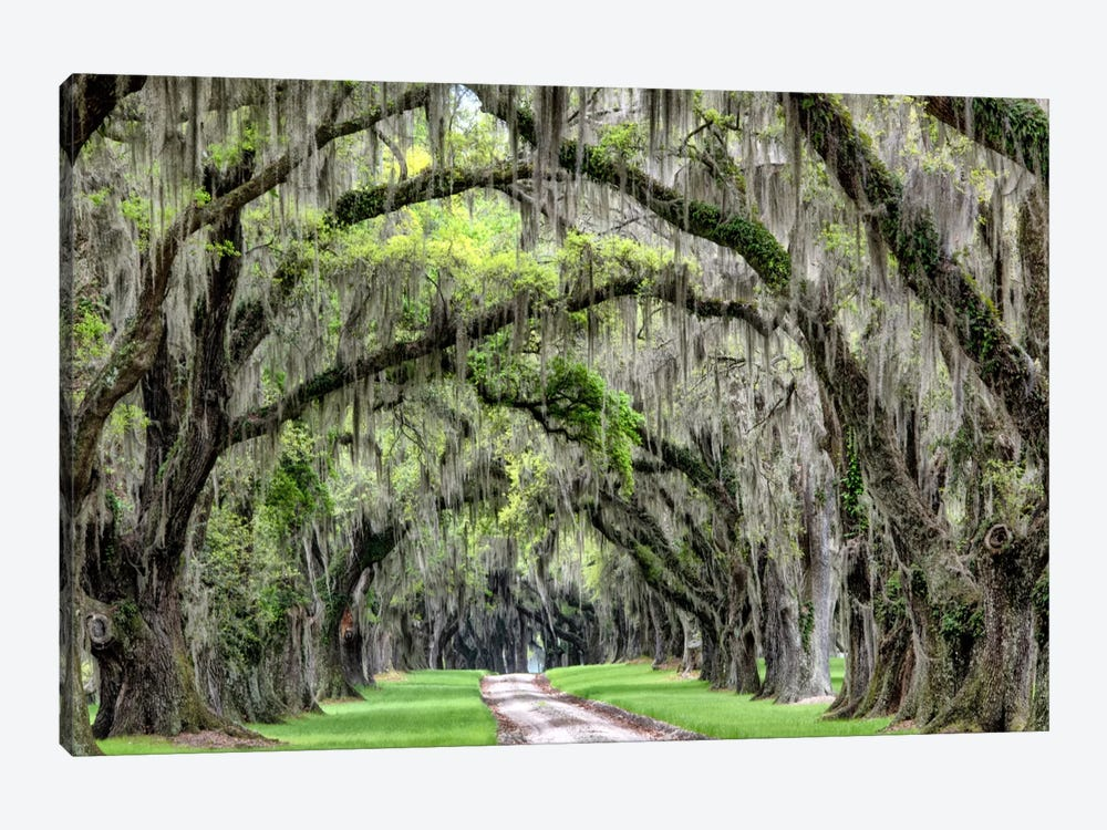 The Old South by Daniel Burt 1-piece Canvas Art Print