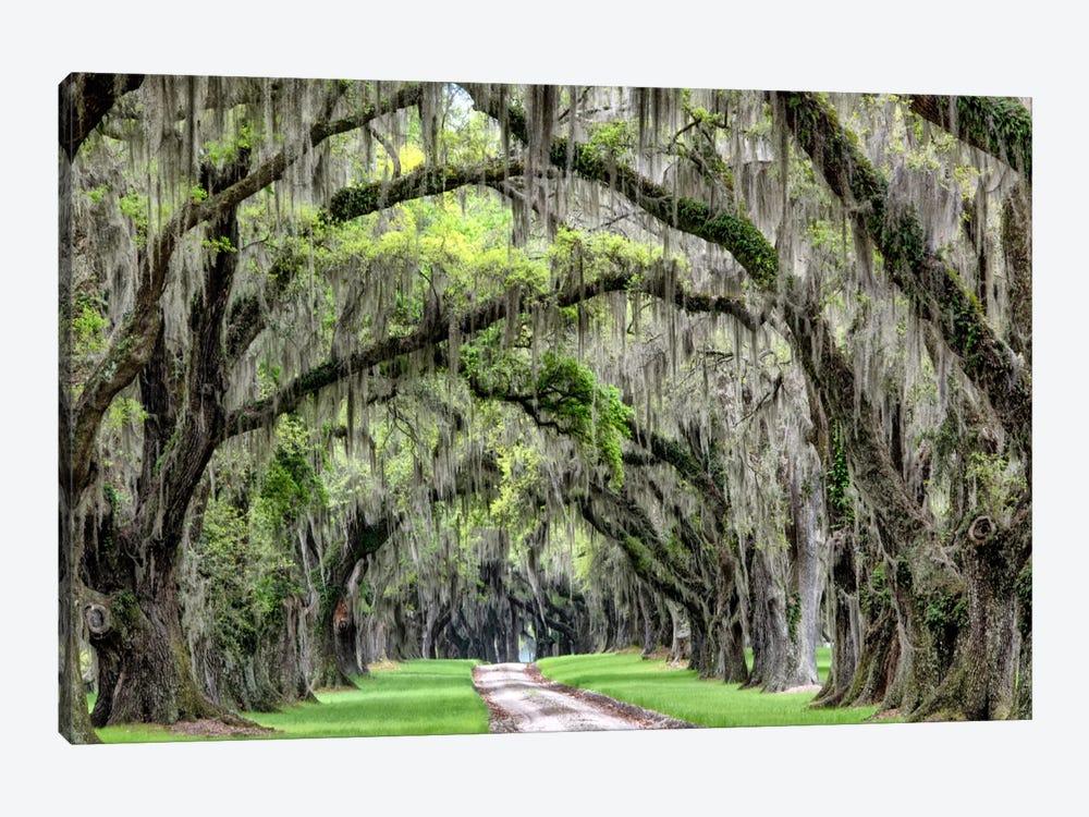 The Old South by Daniel Burt 1-piece Canvas Art Print