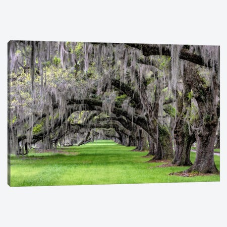 Hanging To The Left Canvas Print #DBU3} by Daniel Burt Canvas Wall Art