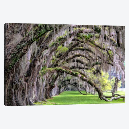 Hanging To The Right Canvas Print #DBU4} by Daniel Burt Art Print
