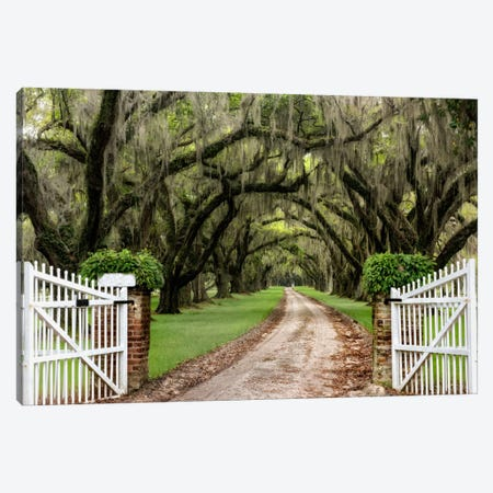 Plantation Road Canvas Print #DBU6} by Daniel Burt Canvas Art Print