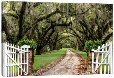 Plantation Road Canvas Art Print