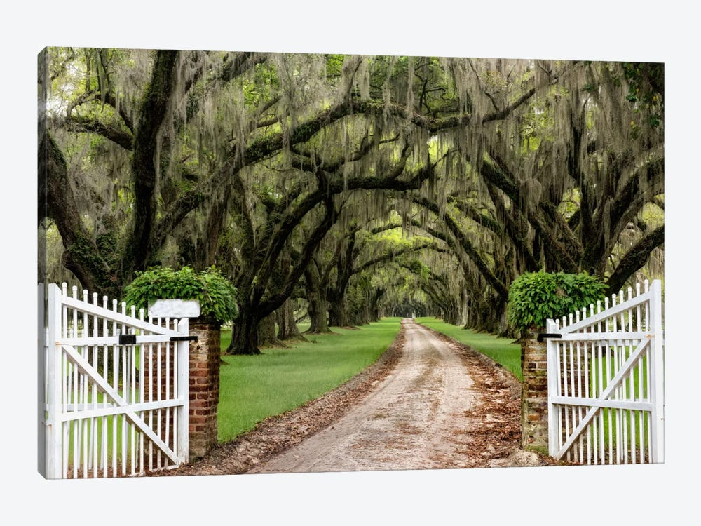 Plantation Road by Daniel Burt 1-piece Art Print