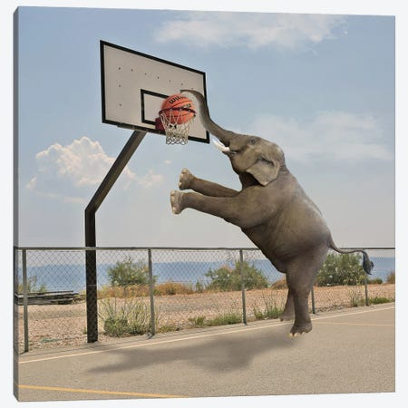 Basketball Canvas Print #DBY10} by Dmitry Biryukov Canvas Art