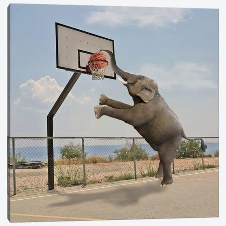 Basketball Canvas Print #DBY10} by Dmitry Biryukov Canvas Art