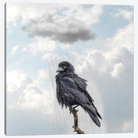 Raven I Canvas Print #DBY14} by Dmitry Biryukov Canvas Art Print
