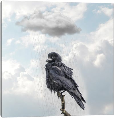 Raven I Canvas Art Print