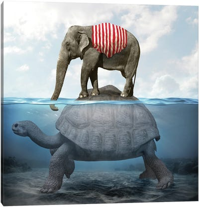 Elephant Turtle I Canvas Art Print