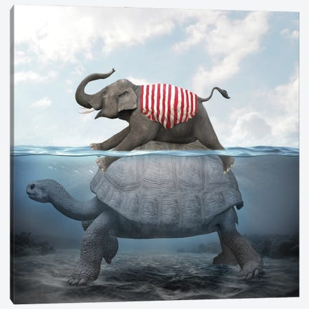 Elephant Turtle II Canvas Print #DBY18} by Dmitry Biryukov Canvas Wall Art
