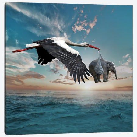 Stork Canvas Print #DBY22} by Dmitry Biryukov Art Print