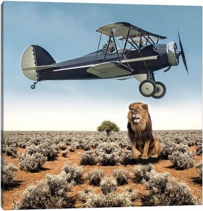 Lion Zebra Canvas Art Print