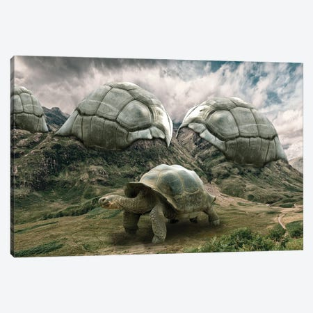 Turtle Canvas Print #DBY31} by Dmitry Biryukov Canvas Art