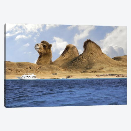 Camel Mountains Canvas Print #DBY35} by Dmitry Biryukov Art Print