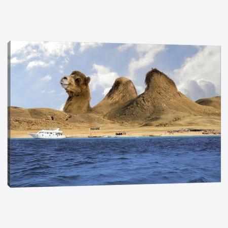 Camel Mountains Canvas Print #DBY35} by Dmitry Biryukov Art Print